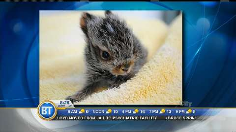 """Why you shouldn't """"rescue"""" a young rabbit"""